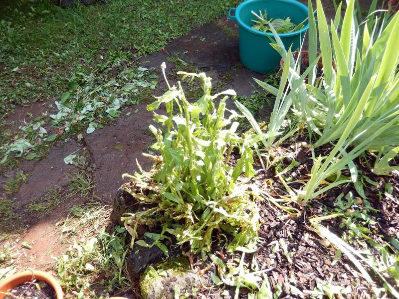 Dans mon jardin, il n'y a plus ..... 03-20111