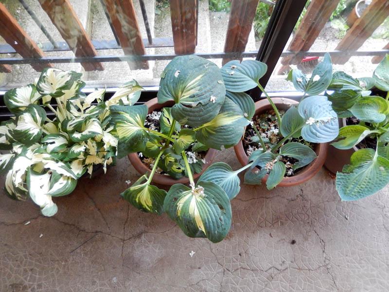 Dans mon jardin, il n'y a plus ..... 05-20111