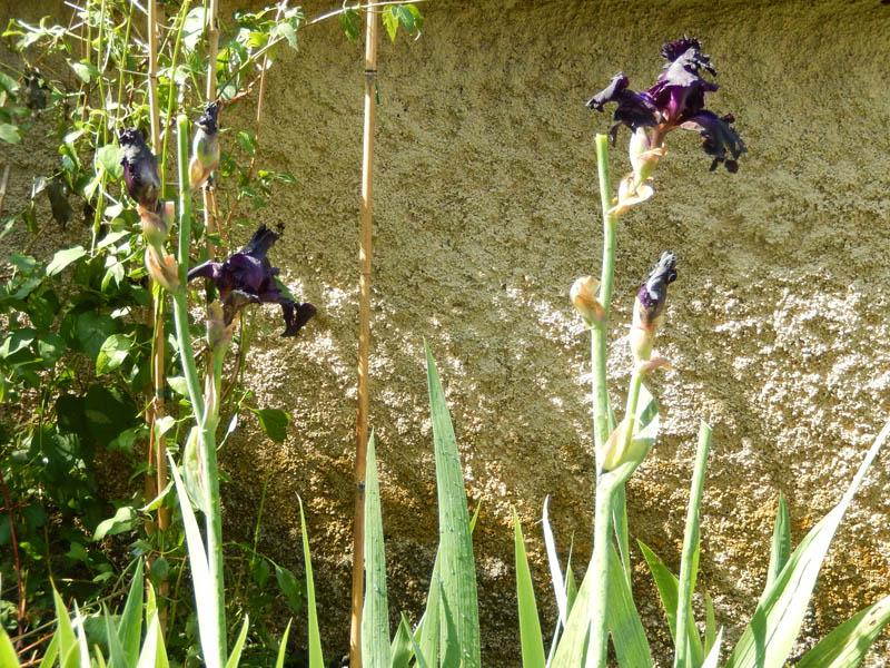 Dans mon jardin, il n'y a plus ..... 10-20111