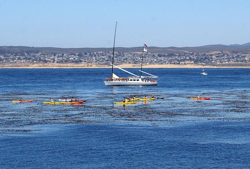 """Défi""""les dauphins""""à Monterey, Californie Mont110"""