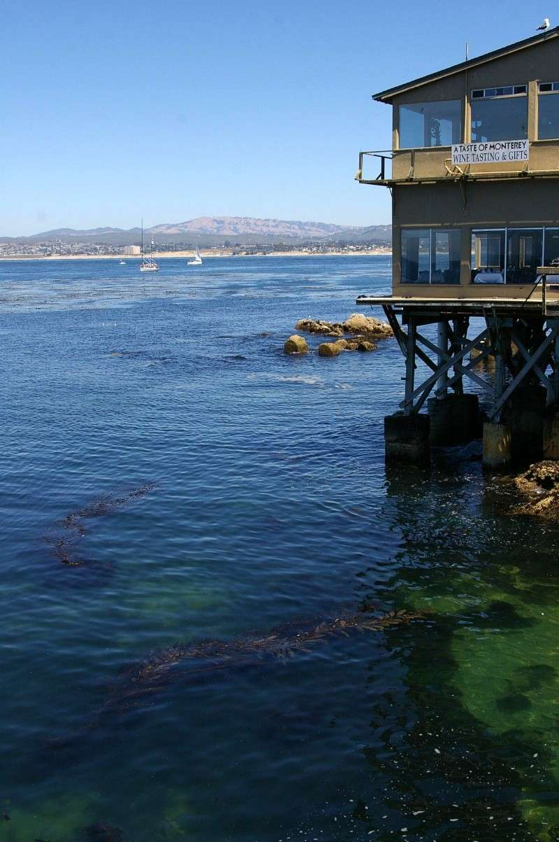 """Défi""""les dauphins""""à Monterey, Californie Mont210"""