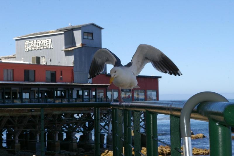 """Défi""""les dauphins""""à Monterey, Californie Mouett10"""