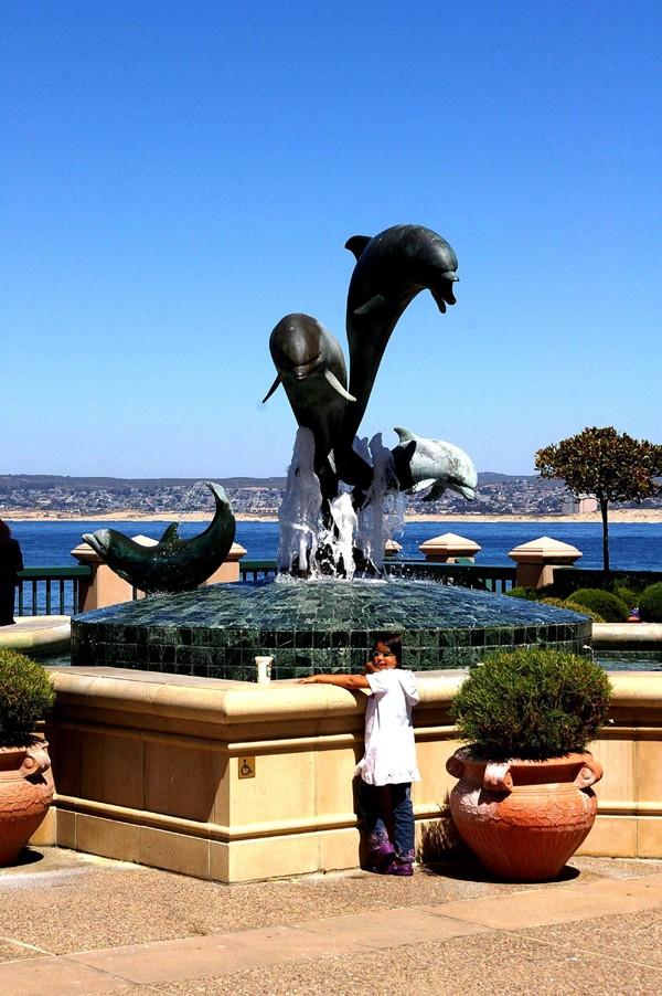 """Défi""""les dauphins""""à Monterey, Californie Tebeze11"""