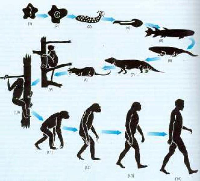 Teoría de la Evolución ¿Ciencia o Creencia? Evoluc10