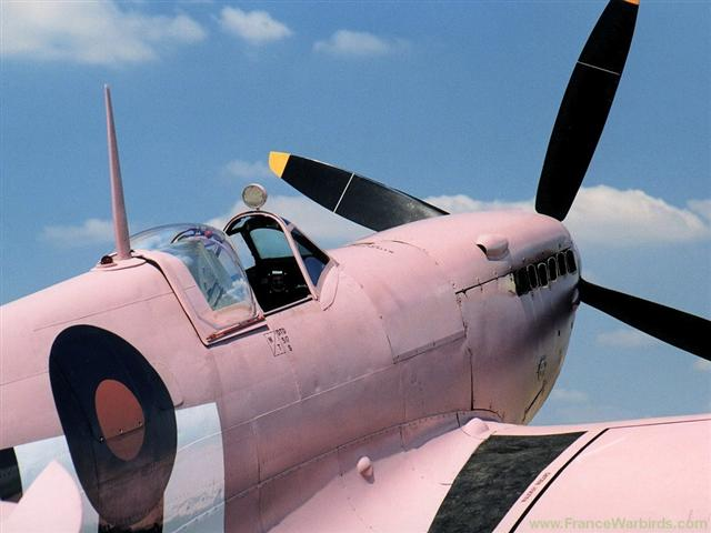 spitfire de rco rose Dyn00210