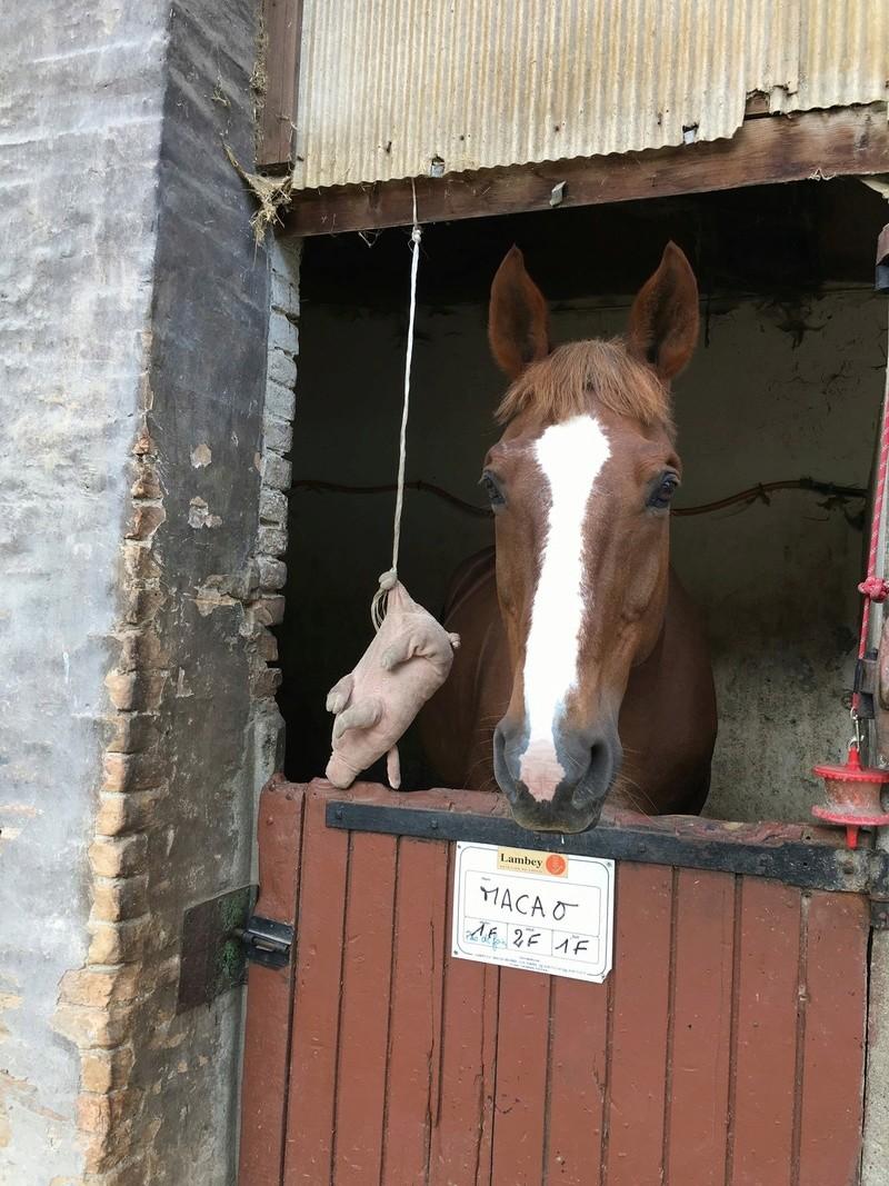 """Concours photos """"les compagnons de vos chevaux"""" gagnant Joël Img_5310"""