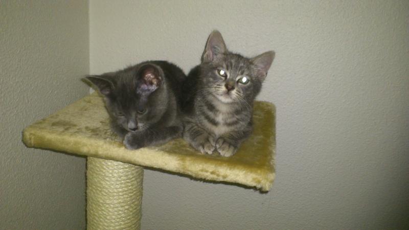 Les chats de Fanny 02510