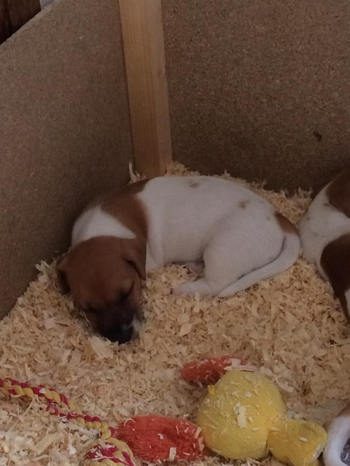Nouveau petit chien bientôt! Img_3211