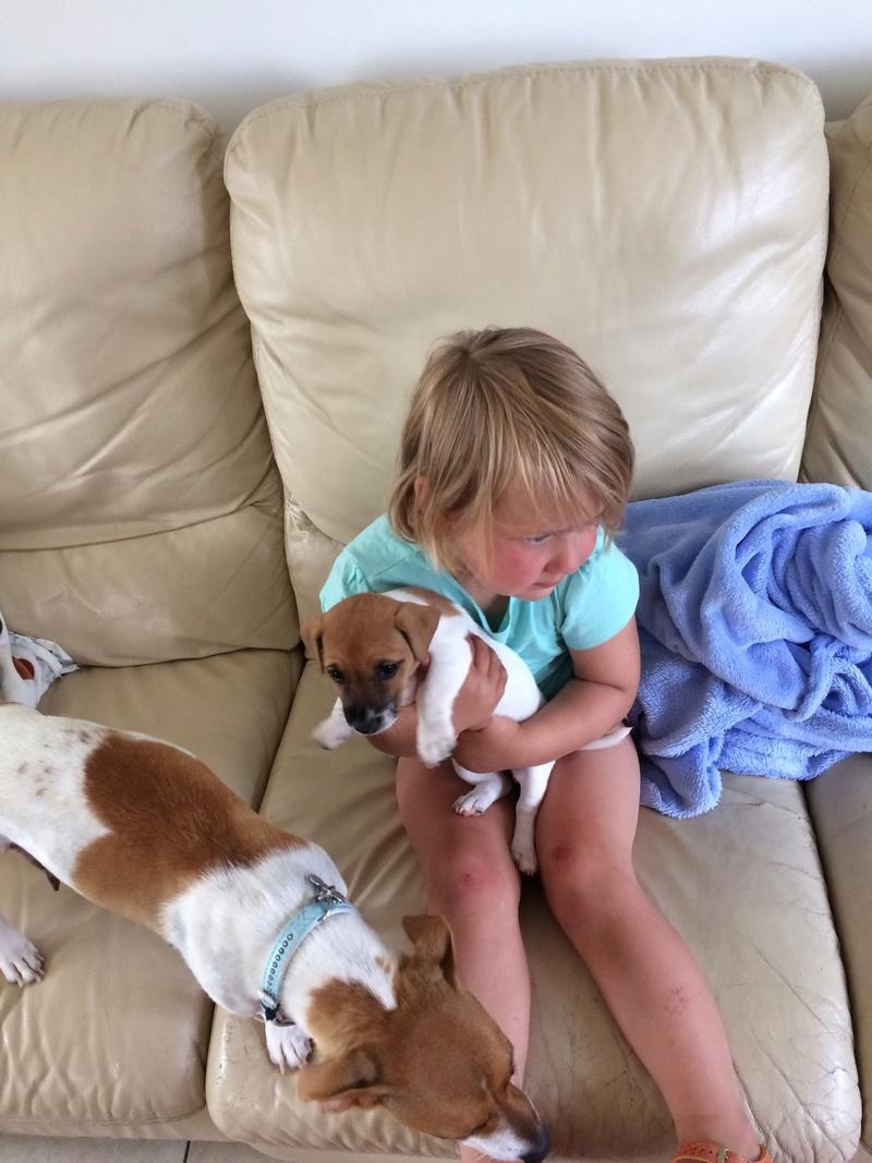 Nouveau petit chien bientôt! Img_3215