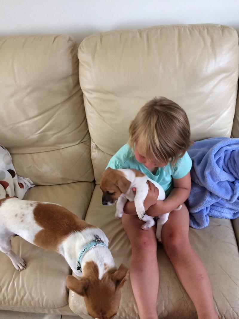Nouveau petit chien bientôt! Img_3216