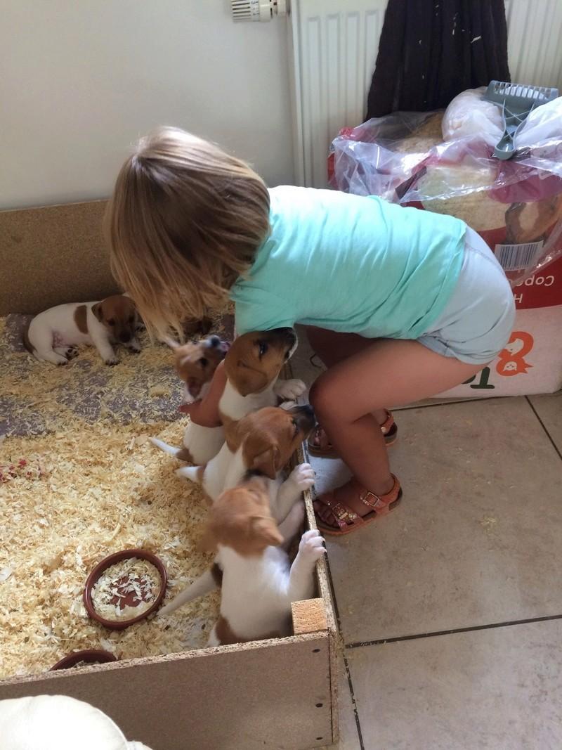 Nouveau petit chien bientôt! Img_3217