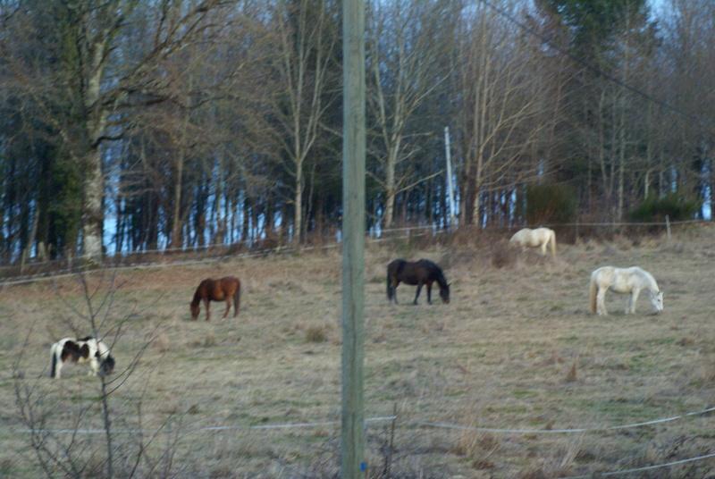 CANNELLE - ONC poney née en 2009 - adoptée en décembre 2013 par Catie - Page 3 Dsc08612