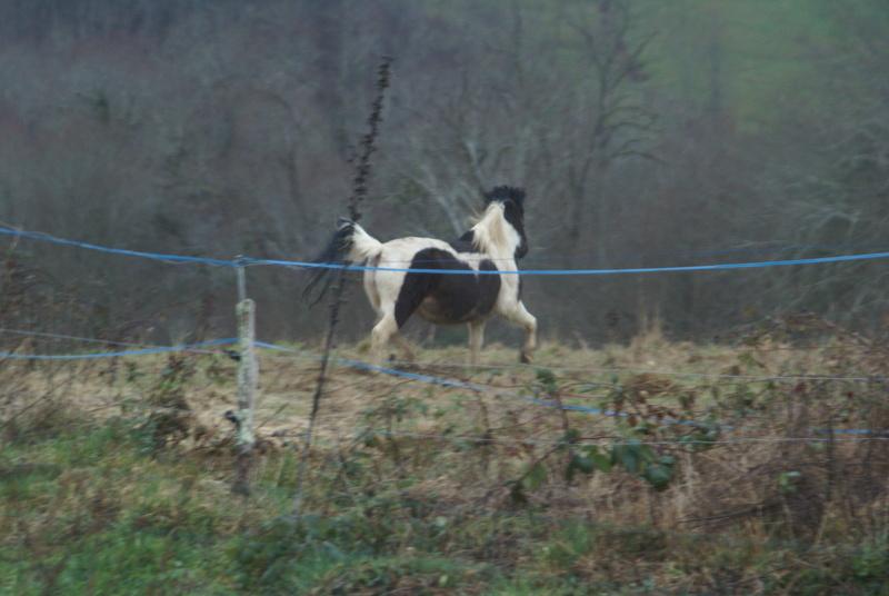 CANNELLE - ONC poney née en 2009 - adoptée en décembre 2013 par Catie - Page 3 Dsc08710
