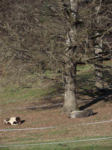 CANNELLE - ONC poney née en 2009 - adoptée en décembre 2013 par Catie Dscf6112