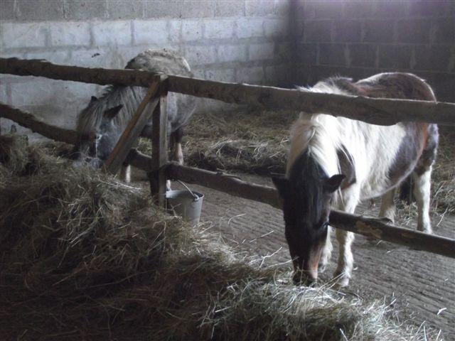 CANNELLE - ONC poney née en 2009 - adoptée en décembre 2013 par Catie Dscf6116