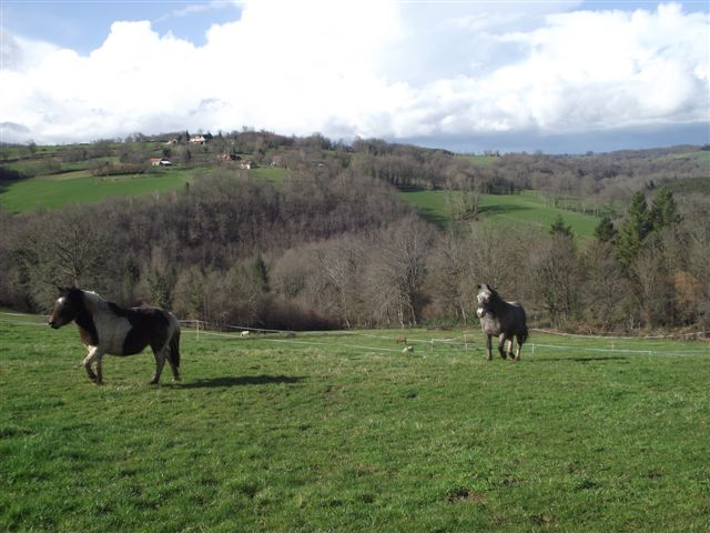 CANNELLE - ONC poney née en 2009 - adoptée en décembre 2013 par Catie Dscf6310