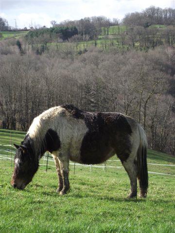 CANNELLE - ONC poney née en 2009 - adoptée en décembre 2013 par Catie Dscf6311