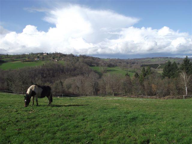CANNELLE - ONC poney née en 2009 - adoptée en décembre 2013 par Catie Dscf6312