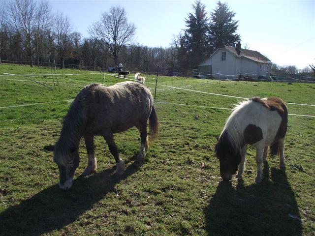 CANNELLE - ONC poney née en 2009 - adoptée en décembre 2013 par Catie Dscf6410