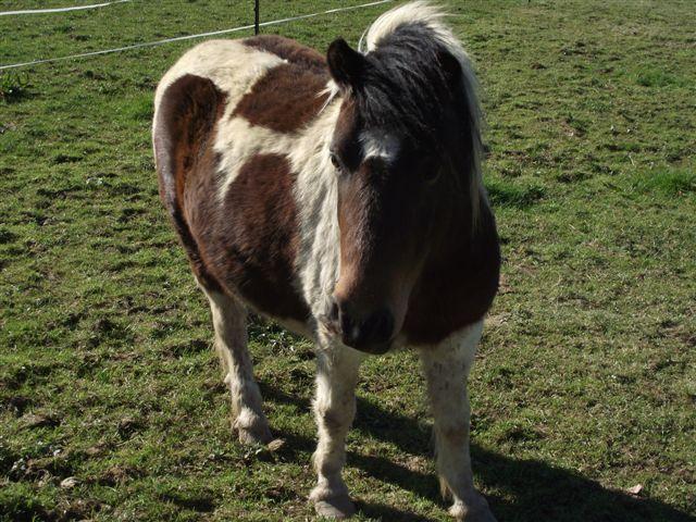 CANNELLE - ONC poney née en 2009 - adoptée en décembre 2013 par Catie Dscf6411