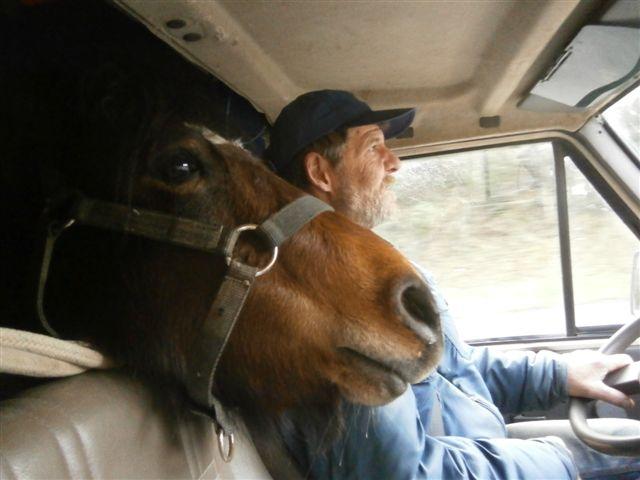 CANNELLE - ONC poney née en 2009 - adoptée en décembre 2013 par Catie Pc300010