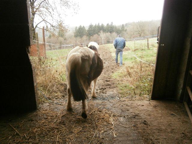 CANNELLE - ONC poney née en 2009 - adoptée en décembre 2013 par Catie Pc300013