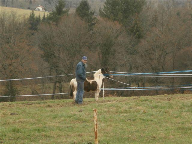 CANNELLE - ONC poney née en 2009 - adoptée en décembre 2013 par Catie Pc300014