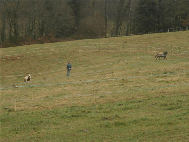 CANNELLE - ONC poney née en 2009 - adoptée en décembre 2013 par Catie Pc300016