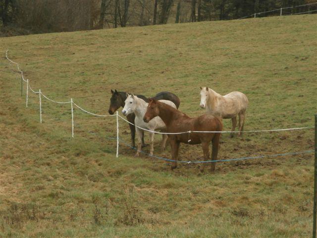 CANNELLE - ONC poney née en 2009 - adoptée en décembre 2013 par Catie Pc300017
