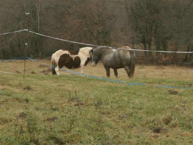 CANNELLE - ONC poney née en 2009 - adoptée en décembre 2013 par Catie Pc300018