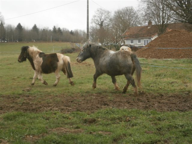 CANNELLE - ONC poney née en 2009 - adoptée en décembre 2013 par Catie Pc300110