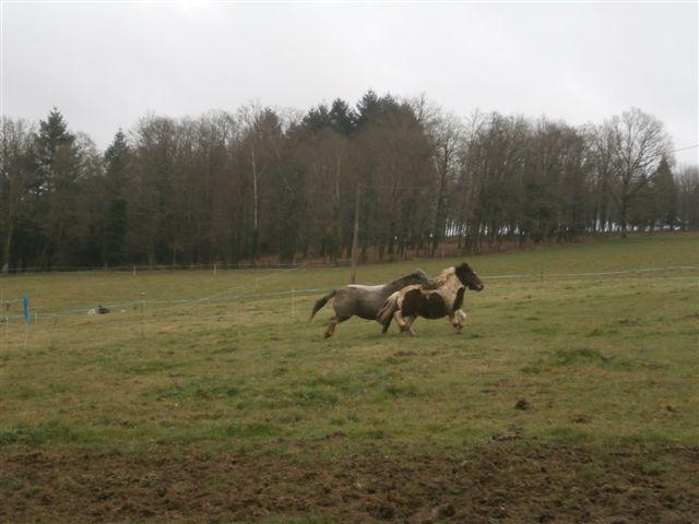 CANNELLE - ONC poney née en 2009 - adoptée en décembre 2013 par Catie Pc300111