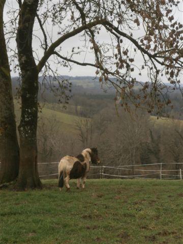 CANNELLE - ONC poney née en 2009 - adoptée en décembre 2013 par Catie Pc300112