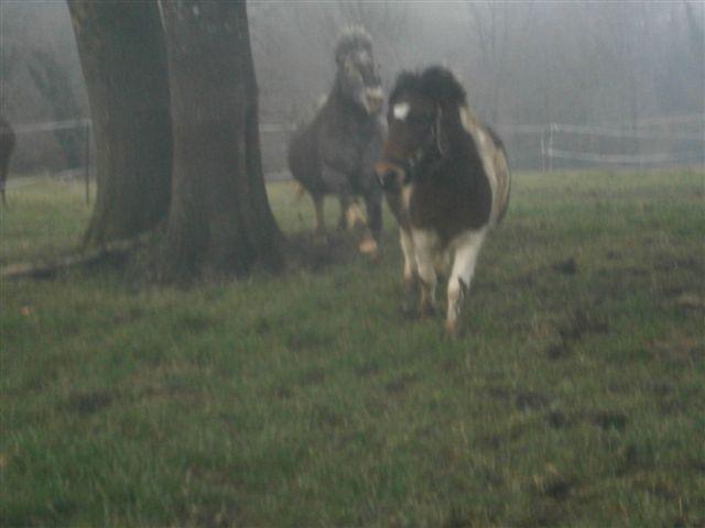 CANNELLE - ONC poney née en 2009 - adoptée en décembre 2013 par Catie Pc300114