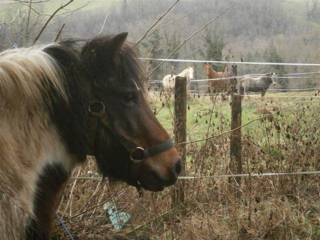 CANNELLE - ONC poney née en 2009 - adoptée en décembre 2013 par Catie Pc300115