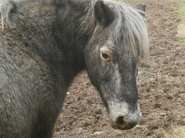 CANNELLE - ONC poney née en 2009 - adoptée en décembre 2013 par Catie Pc300116