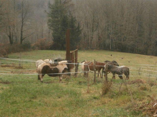 CANNELLE - ONC poney née en 2009 - adoptée en décembre 2013 par Catie Pc300117