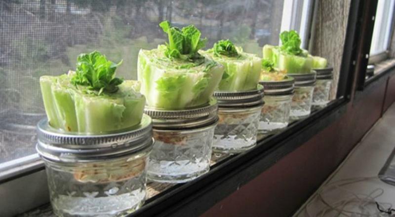 légumes à faire repousser indéfiniment (dans votre cuisine) 28880-10