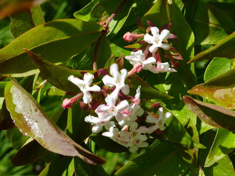 encore une autre plante énigme a trouver P1000835