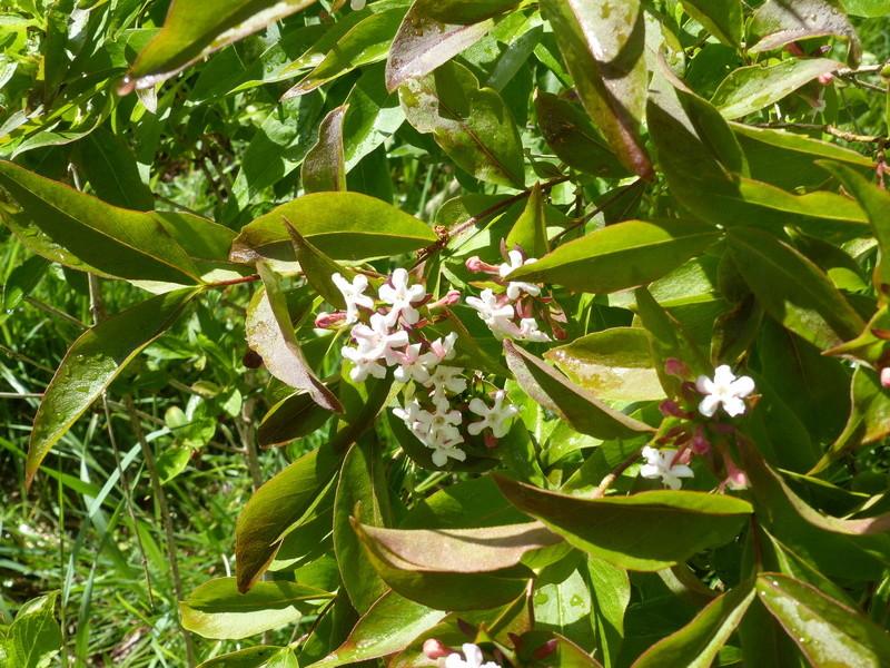 encore une autre plante énigme a trouver P1000836
