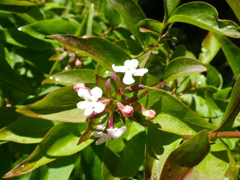 encore une autre plante énigme a trouver P1000837