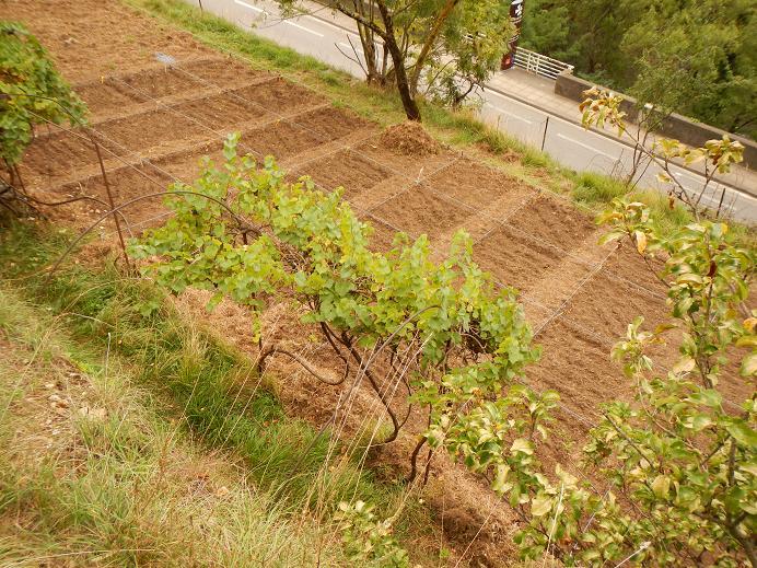 Le jardin de Foix Jardin11