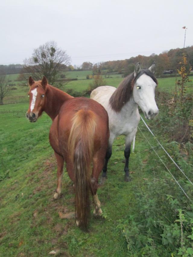 Menotte et Chamrock. Img_5711