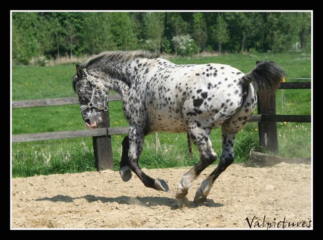 Mes photos de chevaux... - Page 3 Blog215