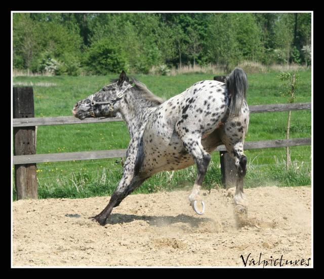 Mes photos de chevaux... - Page 3 Blog314