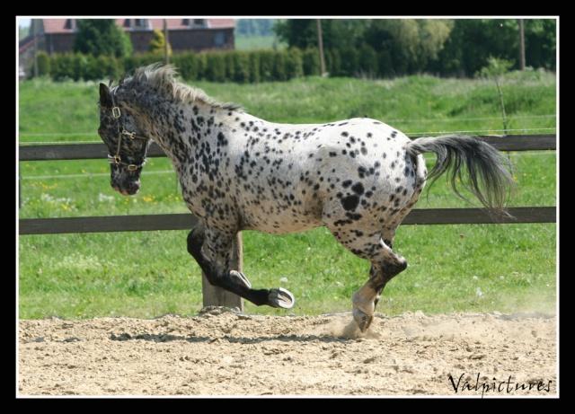 Mes photos de chevaux... - Page 3 Blog414