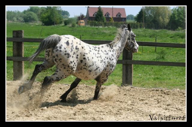 Mes photos de chevaux... - Page 3 Blog513