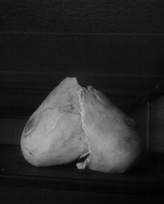 moulage partie du corps humain 18052011