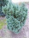 renseignement conifères et arbres Dscn0624