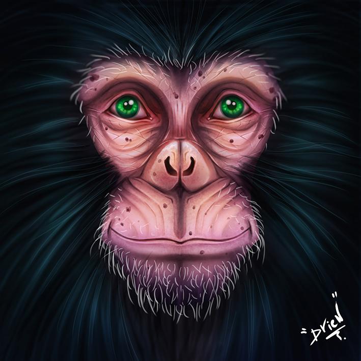 Images drien - Page 3 Chimpa10